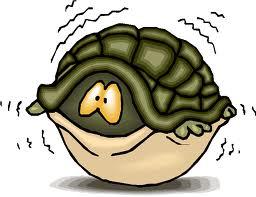 fear in a shell